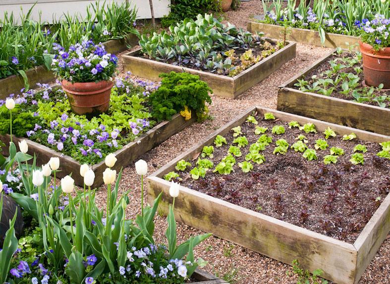 raised_garden_beds